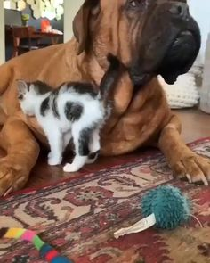 Very cute animals and reactions. We love to make people happy with showing the most beautiful furry babies we have! Cute Baby Cats, Cute Little Animals, Cute Funny Animals, Funny Dogs, Funny Farm, Adorable Dogs, Cute Animal Videos, Cute Animal Pictures, Baby Pictures