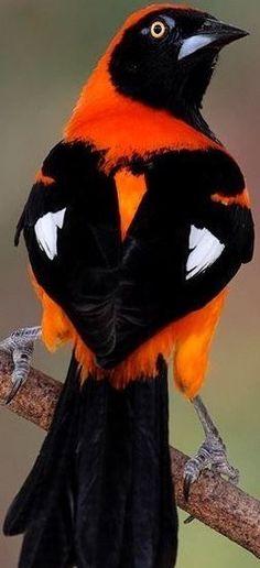 Kinds Of Birds, All Birds, Little Birds, Love Birds, Tropical Birds, Exotic Birds, Colorful Birds, Pretty Birds, Beautiful Birds