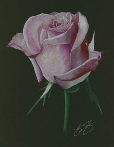 Tutorial colored pencil rose. Like the idea of using black paper.