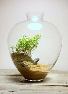 best scene terrarium - Google Search