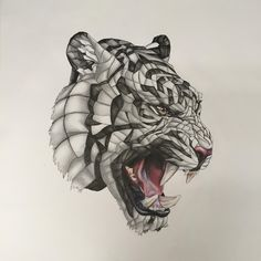 Wrapped Tiger, Pencil/Pen/Colour Pencil, 20x20 in.