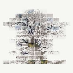 Noel Myles, Sketch Film of a Tree, 2013 / 2013 © www.lumas.de/ #Lumas