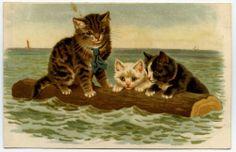"""héléna maguire chat cat katze gatto  """" le naufrage """""""