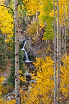 Nellie Creek Waterfall by Tad Bowman This photograph depicts Nellie Creek Falls in the Colorado Mountains with brilliant fall colors. Beautiful World, Beautiful Places, Beautiful Pictures, The Places Youll Go, Places To See, Belle Image Nature, Les Cascades, Mellow Yellow, Color Yellow