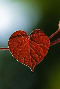 ♥ you are like a colourful leave ... between a world of green ... eye catcher ...I enjoying♥