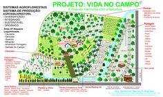 agrofloresta - Pesquisa Google Permaculture, Vegetable Garden, Homesteading, Sustainability, Green, Terra, Homeland, Gardening, Permaculture Garden