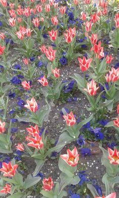 #prime #flower #beautifull