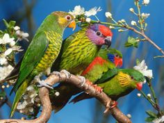 A beleza das aves brasileiras | Thoni Litsz