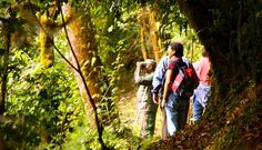 Trekking in Nyungwe Forest, Rwanda - Photo by Nyungwe Forest Lodge