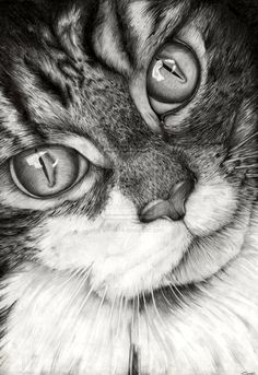 Cat Drawing by Vinnie14