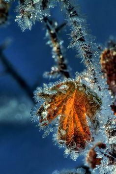 Beautiful Frost!  I love God's detail in the smallest things.