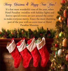 It's that most wonderful time of the year, when Hotel Paradise  twinkles with holiday lights and festive special events are just around the corner to make everyone merry. Enjoy the most charming part of the year with an extra treat at Hotel Paradise Mansion. Happy Year, Merry Christmas And Happy New Year, Holiday Lights, Holiday Decor, Valley View, Best Hotel Deals, Around The Corner, Best Budget, Twinkle Twinkle