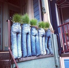 Hilarious! Family of plants in jeans.