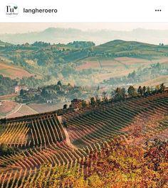 Vineyard, Italy, Wine, Outdoor, Instagram, Outdoors, Italia, Vine Yard, Vineyard Vines
