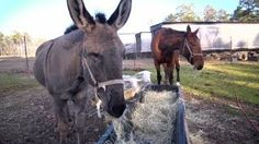 Spending Time With Donkeys | Farm Raised With P. Allen Smith, via YouTube.