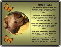 I made it home ~ loss of pet great to give to kids when they lose a pet to ease the pain