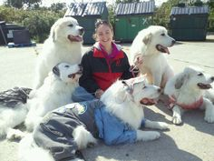 "Not only are they CHAMPIONS they are also THERAPY DOGS  Darlington Great Pyrenees.com   or   Google ""Susie Wong Pet Therapy""  THE LEGACY LIVES ON"
