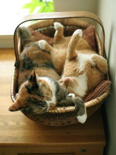 Cute kittens in a basket. Crazy Cat Lady, Crazy Cats, I Love Cats, Cool Cats, Pretty Cats, Beautiful Cats, Animals Beautiful, Cute Animals, Cute Kittens