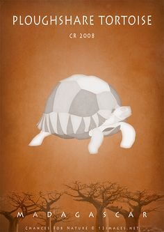 Ploughshare tortoise – Madagascar endangered wildlife Available as poster and art print my whole profit goes to the Sea Shepherd to support their fight to protect our oceans. Sea Shepherd, Western Coast, Poster Series, Wildlife Conservation, Endangered Species, Madagascar, Oceans, Tortoise, Art Print