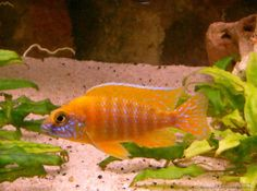 Besatz im Aquarium Becken 179