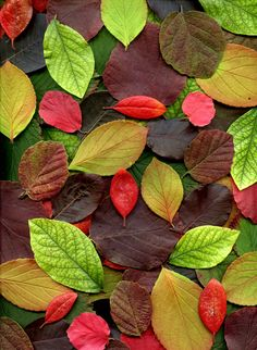 Floral Wallpaper Iphone, Fall Wallpaper, Colorful Wallpaper, Flower Wallpaper, Nature Wallpaper, Tree Leaves, Plant Leaves, Fall Clip Art, Autumn Inspiration