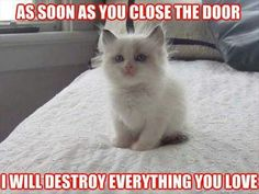Naughty kitty -- have one now that thinks this.... I know she does