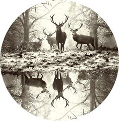 Awestruck! Eventually, something like this will be on my wall:)