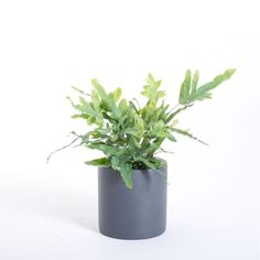Our custom handmade PurePots fiberglass planters are light, will not rust, and will not shatter.  #tradediscount #planters