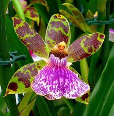 http://la-jardineria.net/category/orquideas