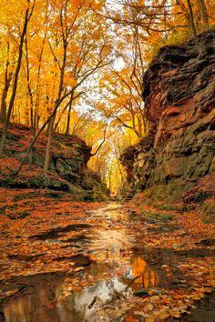 Golden Light  - CountryLiving.com