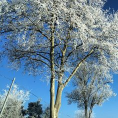 NYE is a little cold in France this morning - magic isn't it!  #upsticksandgo #frost #trees #naturephotos #travel #NYE #france #magic #michfrost #travelgram #travellingtheworld #natureatitsbest