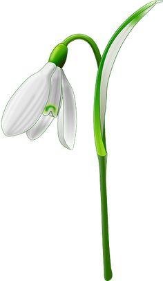 Snowdrop, Flower, Garden, Nature - Free Image on Pixabay