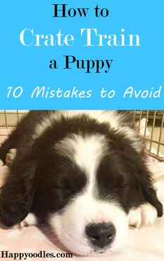 new puppy Crate training can be easy if you can avoid these 10 common mistakes people make as they learn how to crate train a puppy. Puppy Training Tips, Training Your Dog, Dog Crate Training, Puppy Crate Training Schedule, Brain Training, House Training A Puppy, Potty Training Puppies, Clicker Training Puppy, Therapy Dog Training
