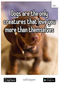 Dogs are the only creatures that love you more than themselves