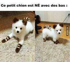 Ce petit chien est né avec des bas! ♥