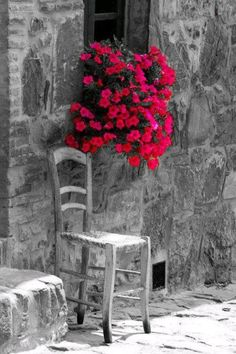 black and white. red flowers