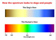 Can Dogs see colors