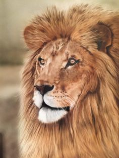 Airbrush Art School – provide lessons from beginner to advanced, portraits, wildlife, custom painting and many more. Visit the website to start your airbrush journey. Painting Studio, Airbrush Art, Custom Paint, Art School, Wildlife, Gallery, Artwork, Journey, Portraits