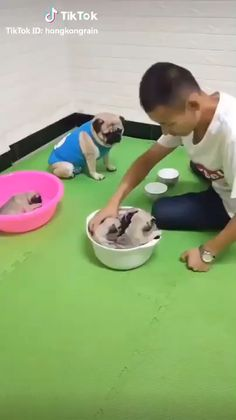 cute pug puppies its a mom saying you ain't selling any of my babies even if I lose, which I didn't. Funny Dog Videos, Funny Animal Memes, Cute Funny Animals, Funny Animal Pictures, Cute Baby Animals, Funny Cute, Funny Dogs, Cute Cats, Humor Videos