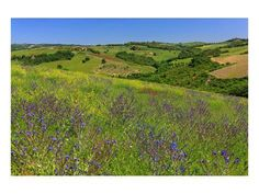 Stretched Canvas Print: Landscape near Volterra in Spring, Province of Pisa, Tuscany, Italy : Spring Landscape, Beach Landscape, Landscape Photos, Italy Art, Ways Of Seeing, Tuscany Italy, Painting Edges, Stretched Canvas Prints, Pisa