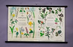 vintage botanical wall chart herald of spring and wild fruits with berries e5238 #Vintage