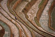 paddies    (Farmers have bent nature to meet their needs  Alessandra Meniconzi)