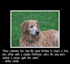 """""""Once someone has had the good fortune to share a true love affair with a Golden Retriever, one's life and one's outlook is never quite the same."""" –Betty White"""