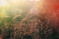 Grass on sunset