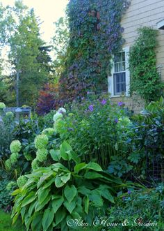 Blues and greens in the garden
