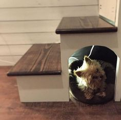Own a tiny pooch? Build a dog house under the stairs. Own a tiny pooch? Build a dog house under the stairs.