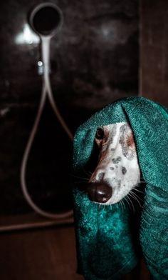Mentett kutyusok kalandja a zuhannyal | lakásművészet Goats, Animals, Animales, Animaux, Animal, Animais, Goat