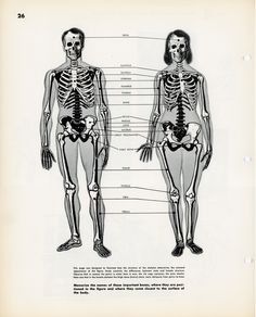 Art 3132: Figure Drawing: Vocabulary List-Skeleton and Directional Terms