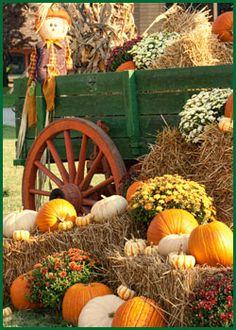 Fall wagon, mums and pumpkins / Pike Nurseries