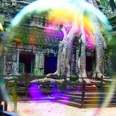 The amazing tree at #AngkorWat used in Tomb Raider -  though a bubble :) #DH #travel #cambodia
